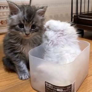 子猫達入れ物の奪い合い