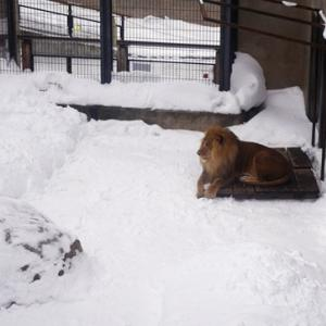 円山動物園と旭山動物園