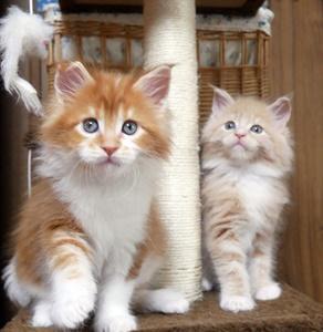 11月30日生まれの子猫の成長