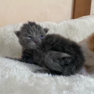 9月19日子猫が生まれました&近況報告