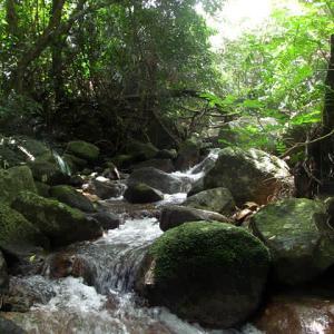 今年の「身近な水環境の全国一斉調査」