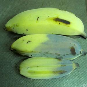 バナナのなやみ