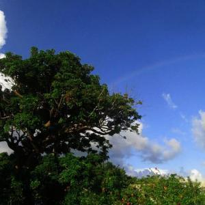 石垣島は虹の遭遇率高いです。