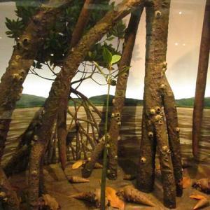 1500万年前、日本列島が出来始めた頃。