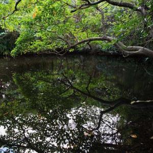 ダハズ自然農園見学会と平得大俣の自然観察2