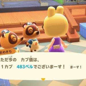 【あつ森】カブ価上昇だーい!!