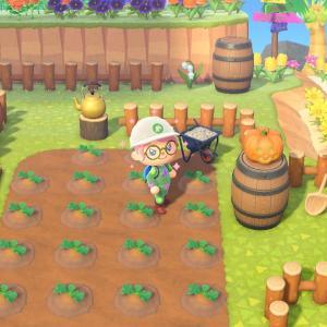 【あつ森】急遽 かぼちゃ畑を作った
