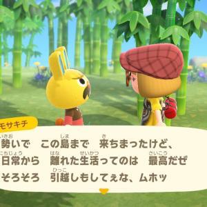 【あつ森】竹の島で勧誘だ~!
