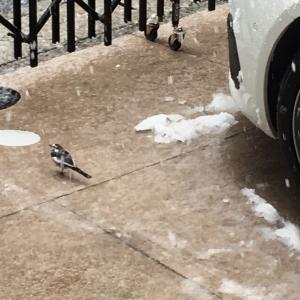 人は閉じ込められ鳥は自由に