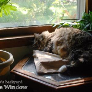 猫が日向を求めるシーズン到来