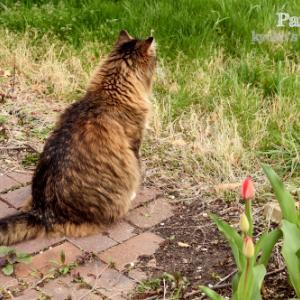 春の裏庭パトロール、その1