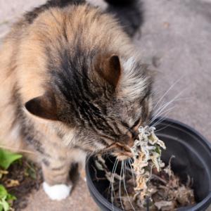 自然乾燥したキャットニップも美味しい