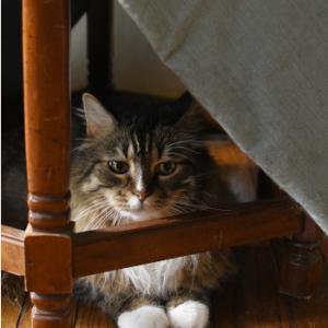 爪切りとブラシを見せたときの猫の反応
