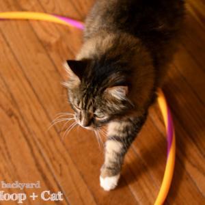 フラフープと猫