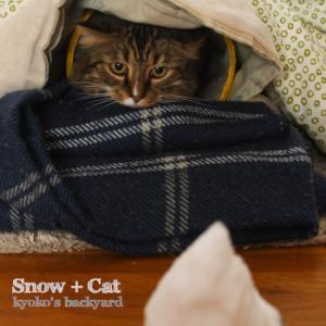 10月の雪と猫