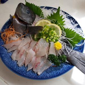 西湘の地魚料理