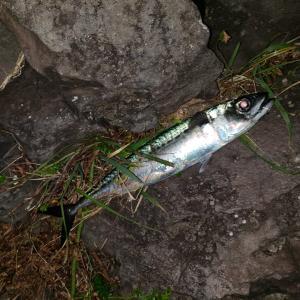 東伊豆の磯で夜釣りした結果