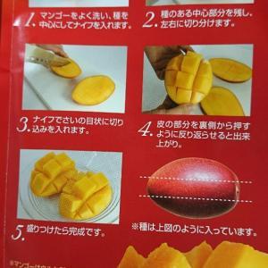 初めてのまるごとマンゴー