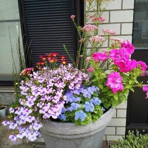 お花と今週の色々