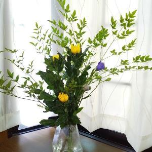 お花とあれこれ