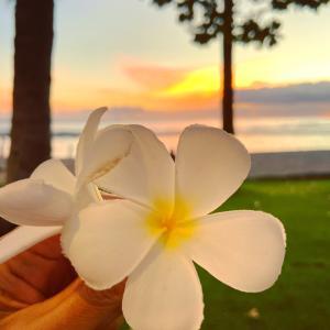 サンセットとプルメリア♡ハワイ