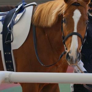 馬から学ぶ