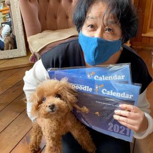 トイプードルカレンダーご購入ありがとうございます!