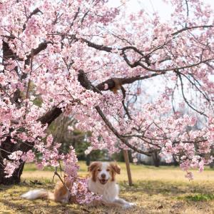 いつものお庭も春爛漫♪
