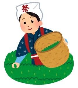 新茶の季節 (八十八夜)