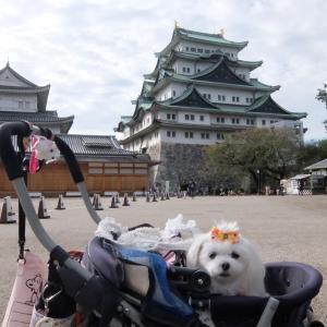 名古屋城に行きました~