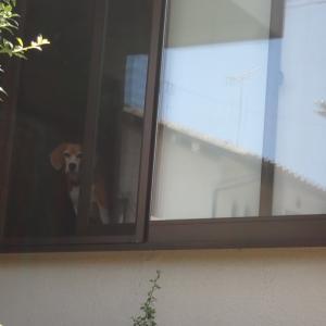 先代犬マロの24回目のバースディ
