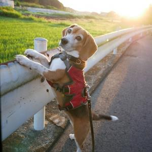 夜明け前散歩はちとコワイ