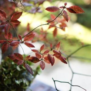自然の赤に見惚れる季節です