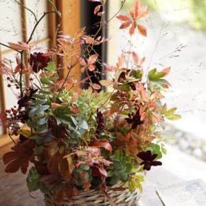 ドウダンと秋色紫陽花のコンポジション