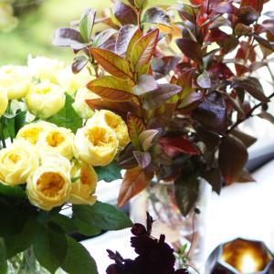 黄色の魅力を知るバラ