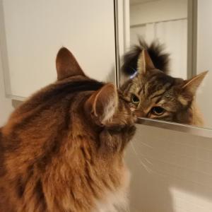 魔法?の鏡