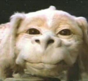 ネバーエンディングストーリーのファルコン顔の写真が撮りたい