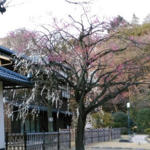 久々の細川庭園