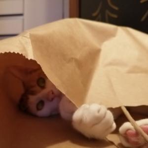イタチ猫の変身