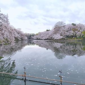 桜と雪の誕生日