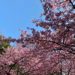 桜見物@林試の森公園