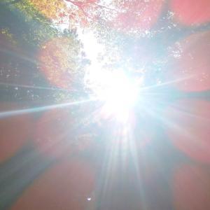 【無料一斉遠隔ヒーリング本日まで】ゼロ磁場×エルフと設定してきましたヾ(*´∀`*)ノ