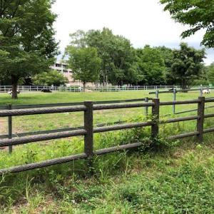 札幌駅の近くに牧場の牛!?