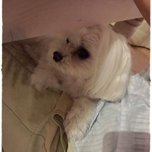 お家で DOG SPA☆