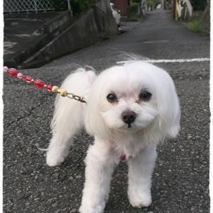 朝散歩→お風呂ちゃぷちゃぷ♪
