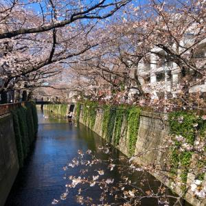 桜daysわくわく夢一杯の自由な世界へ