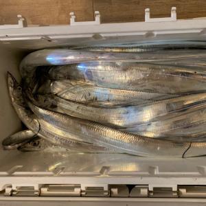太刀魚ジギング@10/24(土)