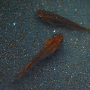 銅五式今年の種親の中の1ペア