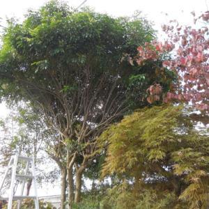 庭木切り と 煌