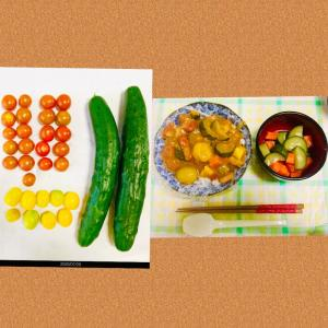【今日の】ミニトマト、キュウリ【収穫】